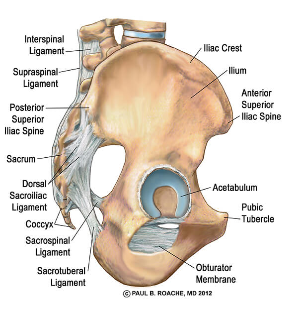 Acetabulum and Labrum