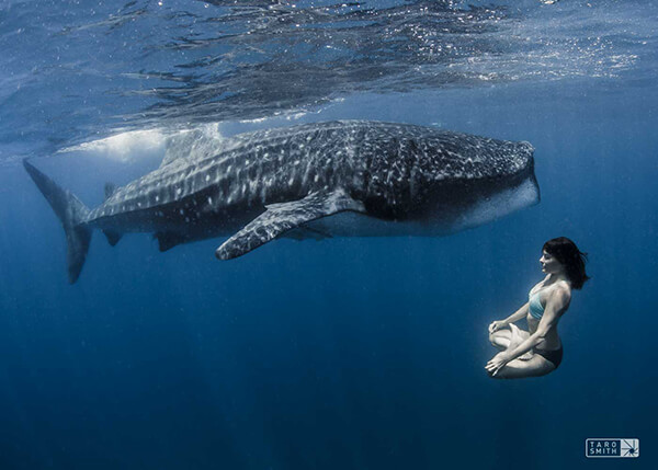 Amy Ippoliti in Lotus with a whale shark