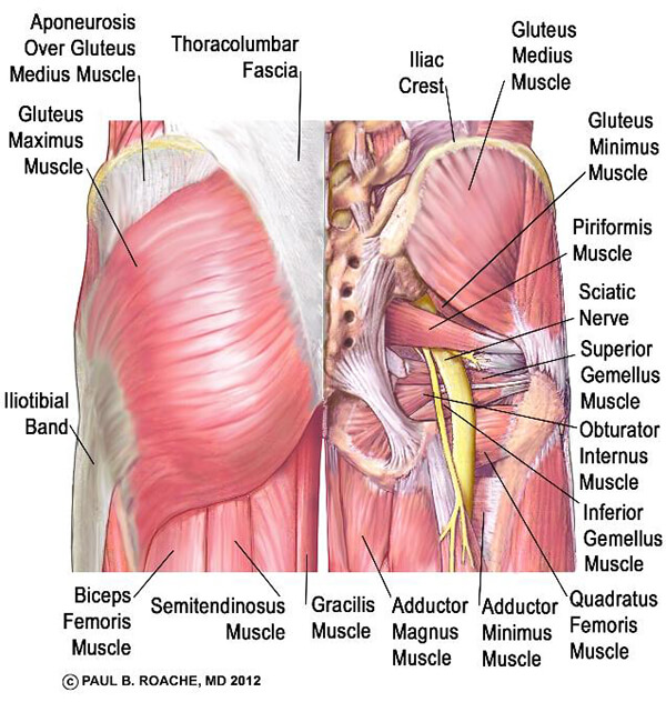 Glutes and Piriformis