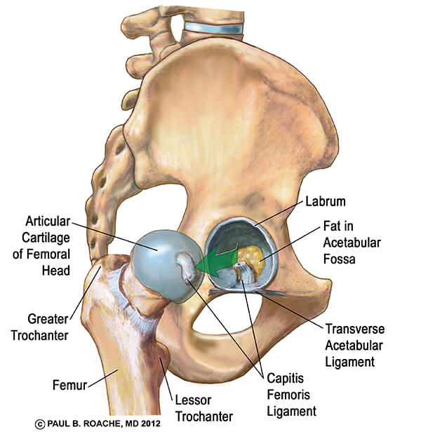 Center of Hip Joint
