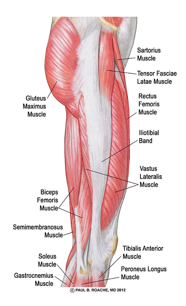 Understanding The Hip Anatomy Muscles For Yoga Jason Crandell Yoga