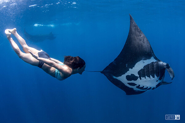 Amy Ippoliti swimming with a manta ray
