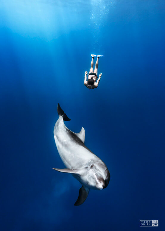 Amy Ippoliti swimming with a bottlenose dolphin