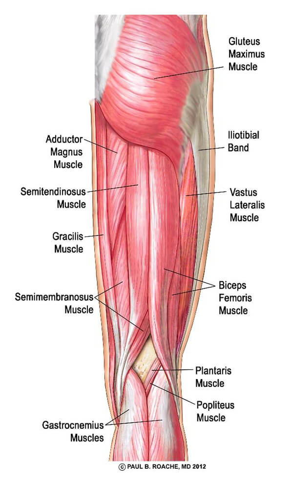 Yoga Anatomy Core - Hamstrings | Jason Crandell Vinyasa Yoga Method