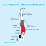 Pose Notebook: Avoid the Banana in Forearm Balance